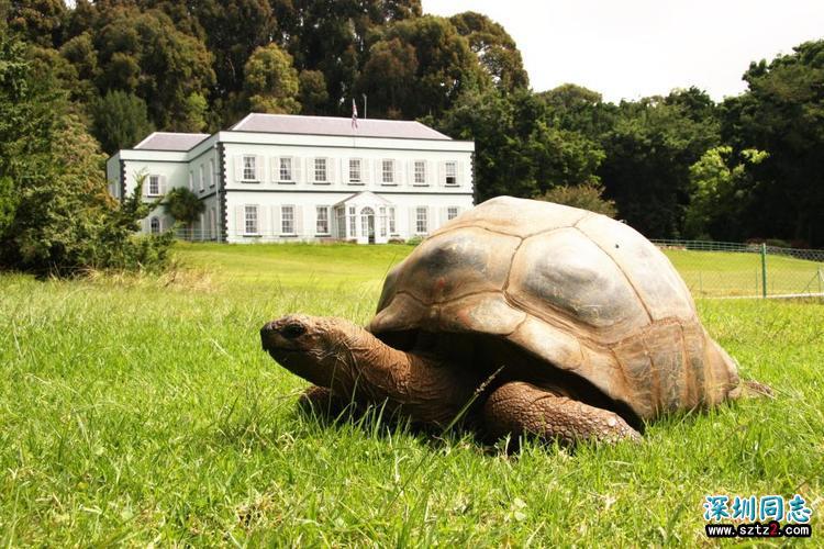 「这世界」全球最长寿的龟,原来它喜欢的是同性啊